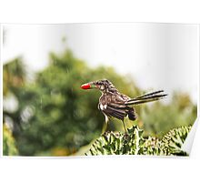 Wet Bird and Berry Poster