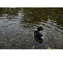 Crystal Clear Water Play - Cute Puppy In The River Photographic Print