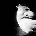 Monochrome by Shirin Hodgson-Watt