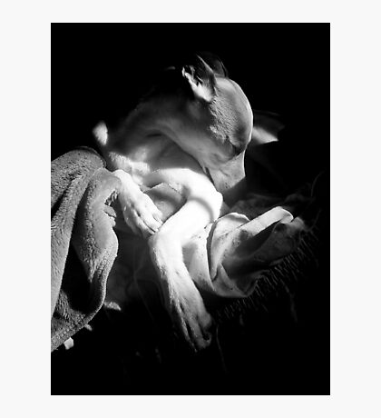 Morning Whippet Photographic Print