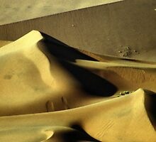Golden Dunes, Namibia by Carole-Anne