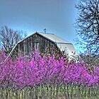 Redbuds and Barn by bannercgtl10