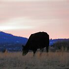 Sunset Cow by © Betty E Duncan ~ Blue Mountain Blessings Photography