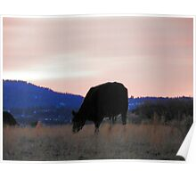 Sunset Cow Poster