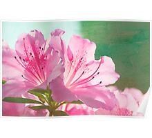 Fleurs de couleur rose Poster