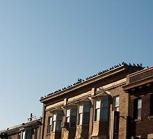 Many Pigeons Roof by Gary Chapple