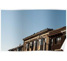 Many Pigeons Roof Poster
