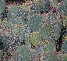 A Bunch Of Cacti by Diego  Re
