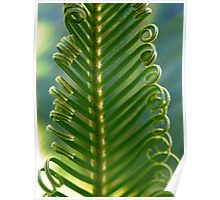 Cycad Fronds Unfurling Poster