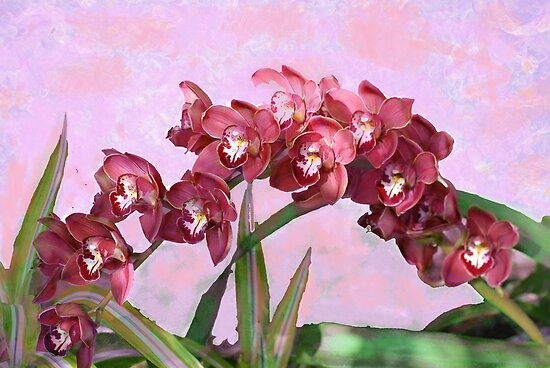 Spring Orchids  by Don Wright