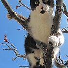 A Model Kitty by nikspix