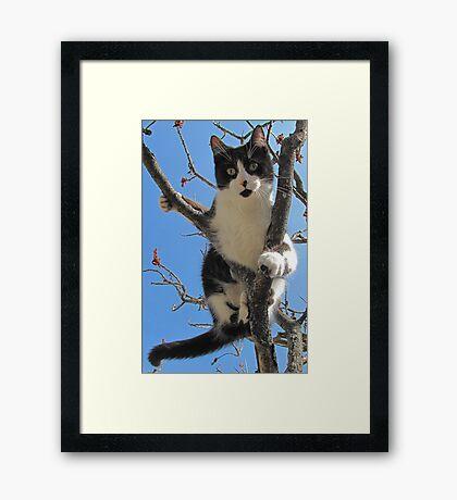 A Model Kitty Framed Print