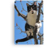 A Model Kitty Canvas Print