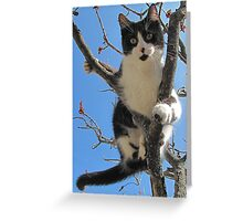 A Model Kitty Greeting Card
