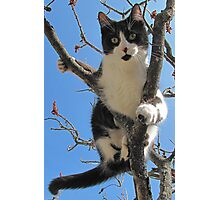 A Model Kitty Photographic Print