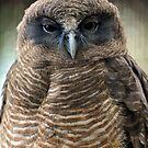 Rufous Owl. Brisbane Queensland, Australia. (2) by Ralph de Zilva
