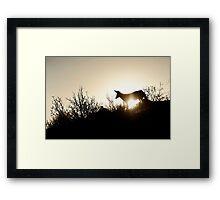 dusk patrol Framed Print