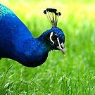 Blue & Green by medlajn
