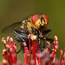 """ Blowfly Macro "" by helmutk"