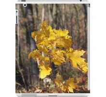 maple gold iPad Case/Skin
