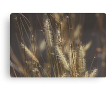 The Answer is Blowing in the Wind. Canvas Print