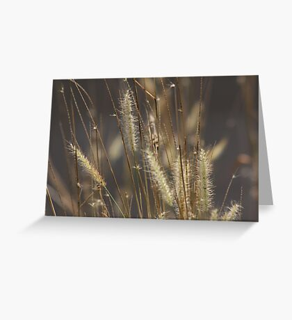 The Answer is Blowing in the Wind. Greeting Card