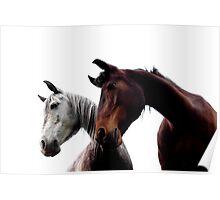 Horses pair Poster