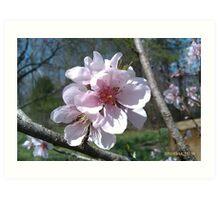 Just Peachy Flowers Art Print