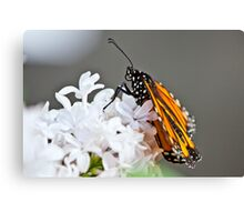 ~Monarch~ Canvas Print