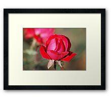A Rose Is.. Framed Print