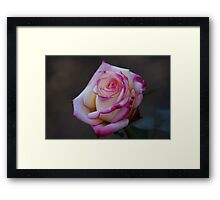 Roses Are Not Always Red... Framed Print