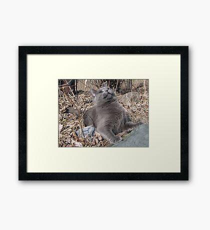 Dear Rodent God ... Framed Print