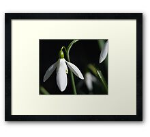 Snow Drop #1 Framed Print