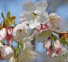 Paper blossom by Laura Minton