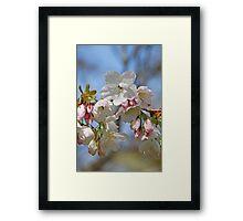 Paper blossom Framed Print