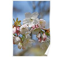 Paper blossom Poster