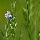 Jewel of the Grass by Sarah Walters