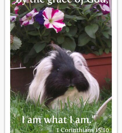 Guinea pig card - I am what I am! Sticker