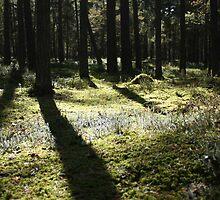 forest by Ilze Romanovska