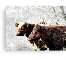 snow cows Canvas Print