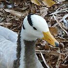 Bar-headed Goose by Marilyn Grimble