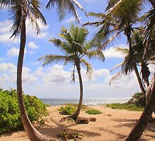 Path through the palm trees to the beach by Roupen  Baker