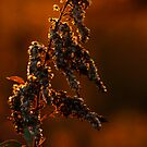 sunset beauty plant by Manon Boily
