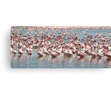 Flamingos and Flamingos..... Canvas Print