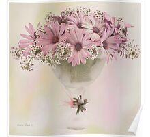 Pink Osteospernum Flowers Poster