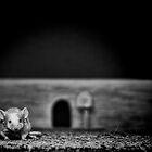 The Mouse by Pene Stevens