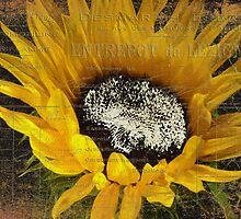 Vintage Sunflower by Karen Lewis