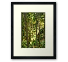 Sunlight Illuminates a Czech Forest Framed Print