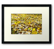 Selective focus on the yellow maple leaves on the lawn closeup Framed Print