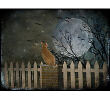 The year of the cat Photographic Print